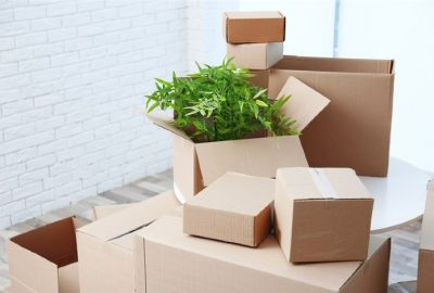 Safely Move Your Plants